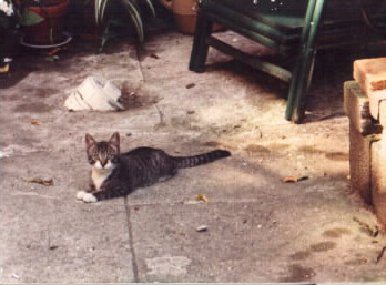 Oliver as a kitten in Boston