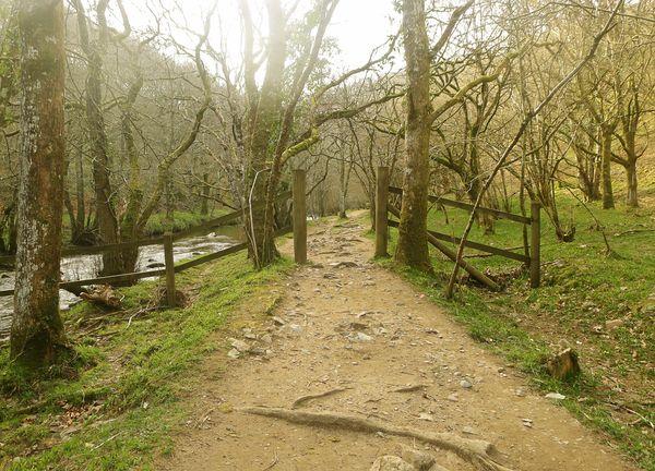 Myth & Moor: The Path Through The Woods