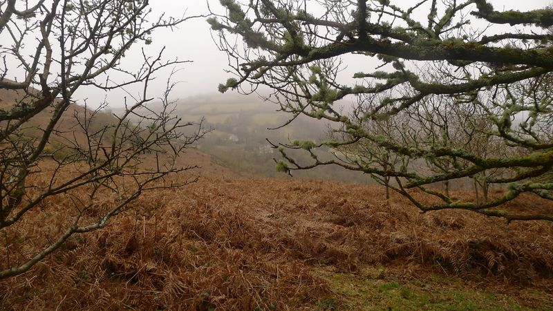 A misty day in the hills