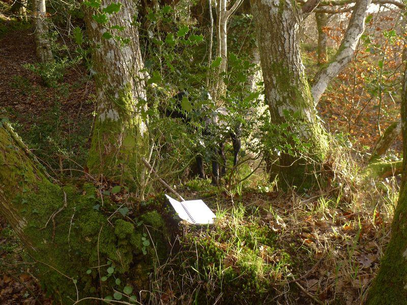 Woodland border 4