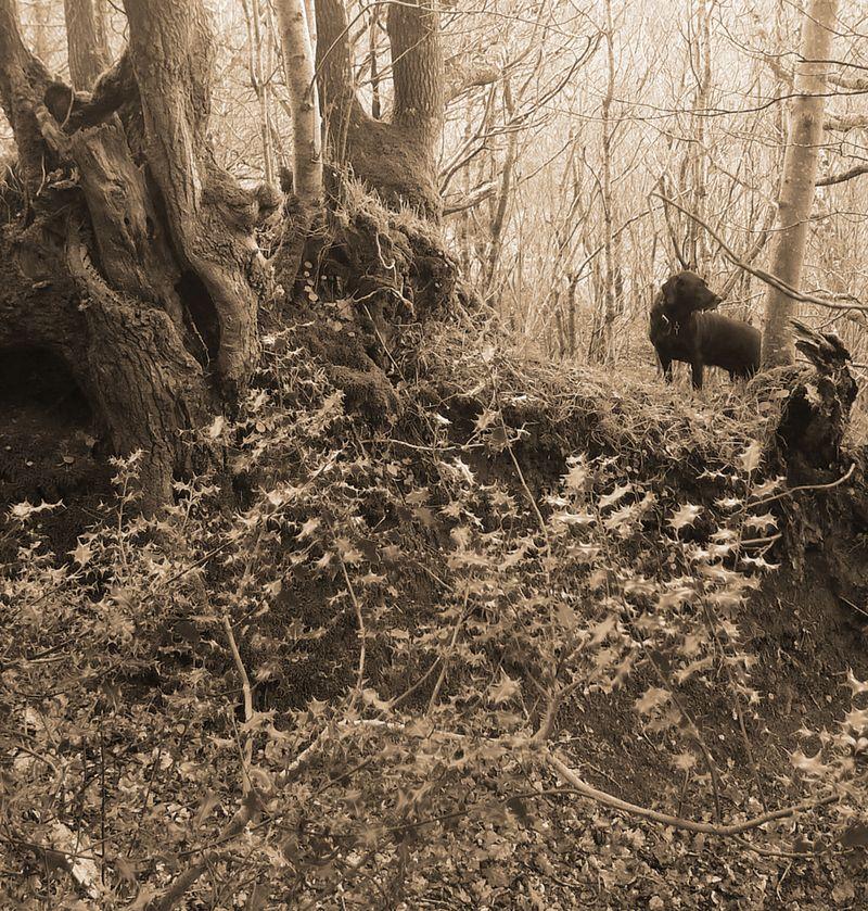 Woodland boundary 1