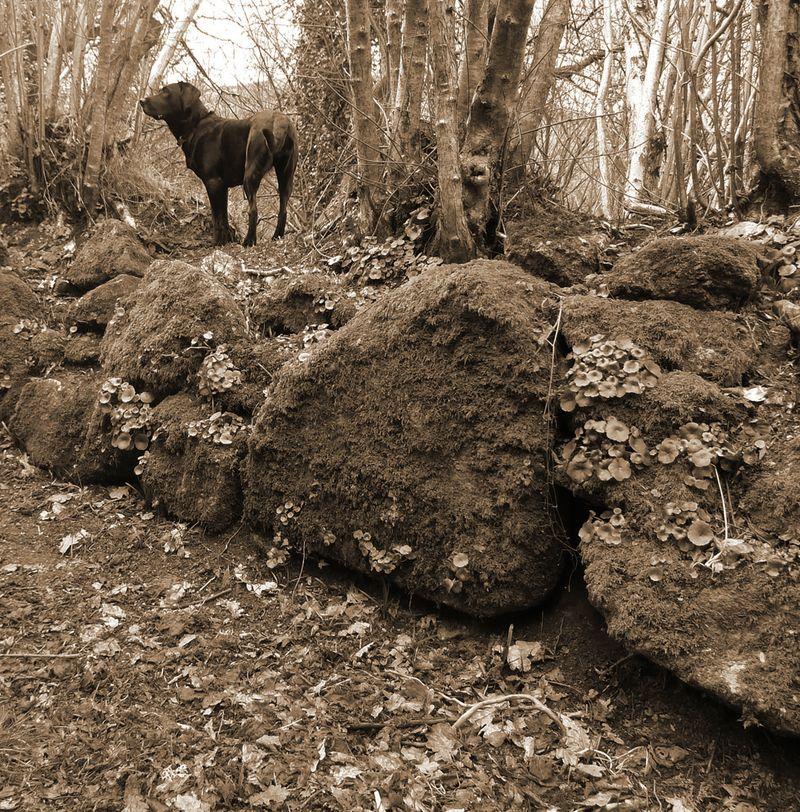 Woodland boundary 7