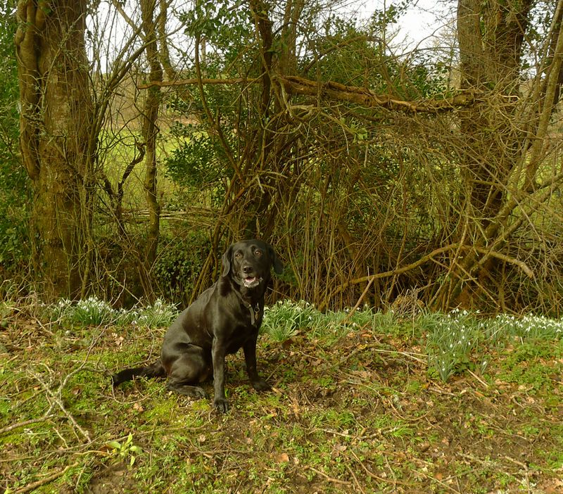 Tilly and the snowdrops
