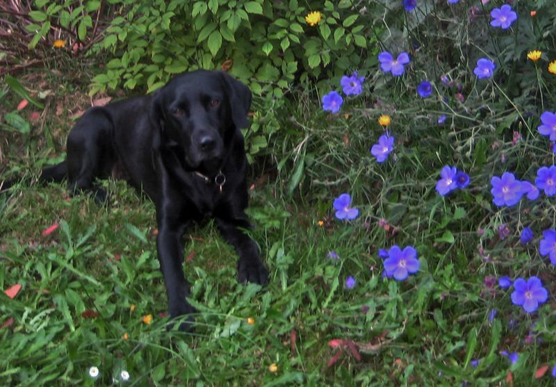 Tilly in the flowers 2