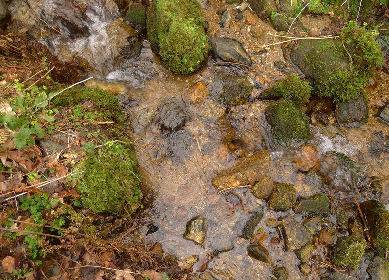 Wood & Water 7