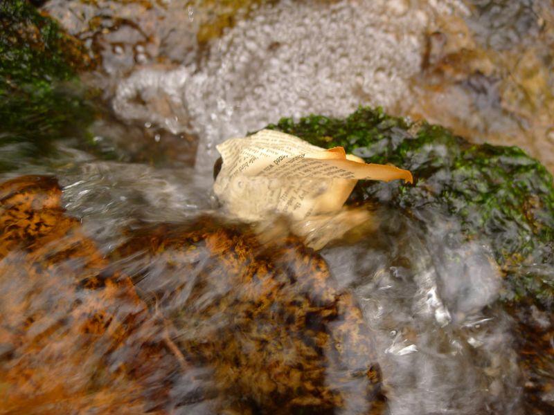 Wood & Water 13