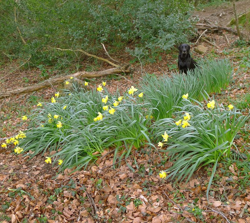Tilly among the dafs
