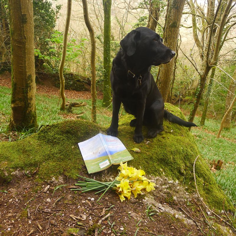 Reading in the woods, with daffodils