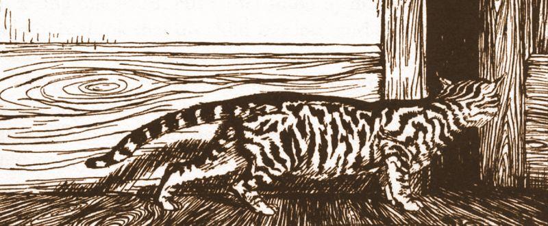 Cat sketch by Arthur Rackham