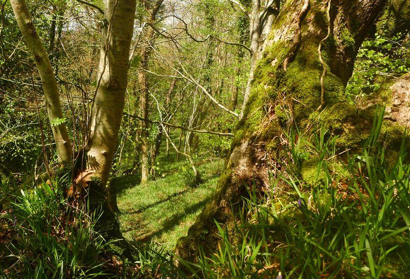 Woodland border 3