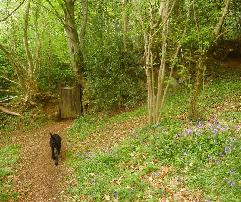 Path to the woodland gate