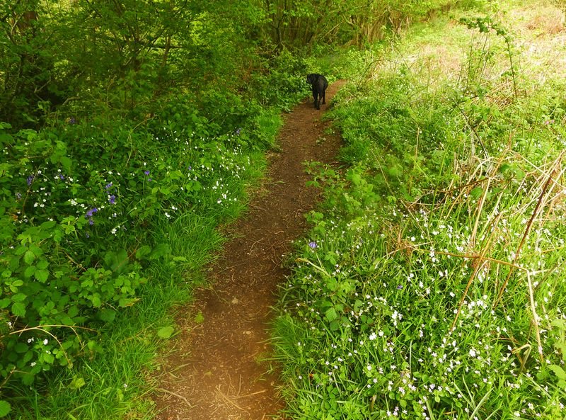 Wildflowers on the path