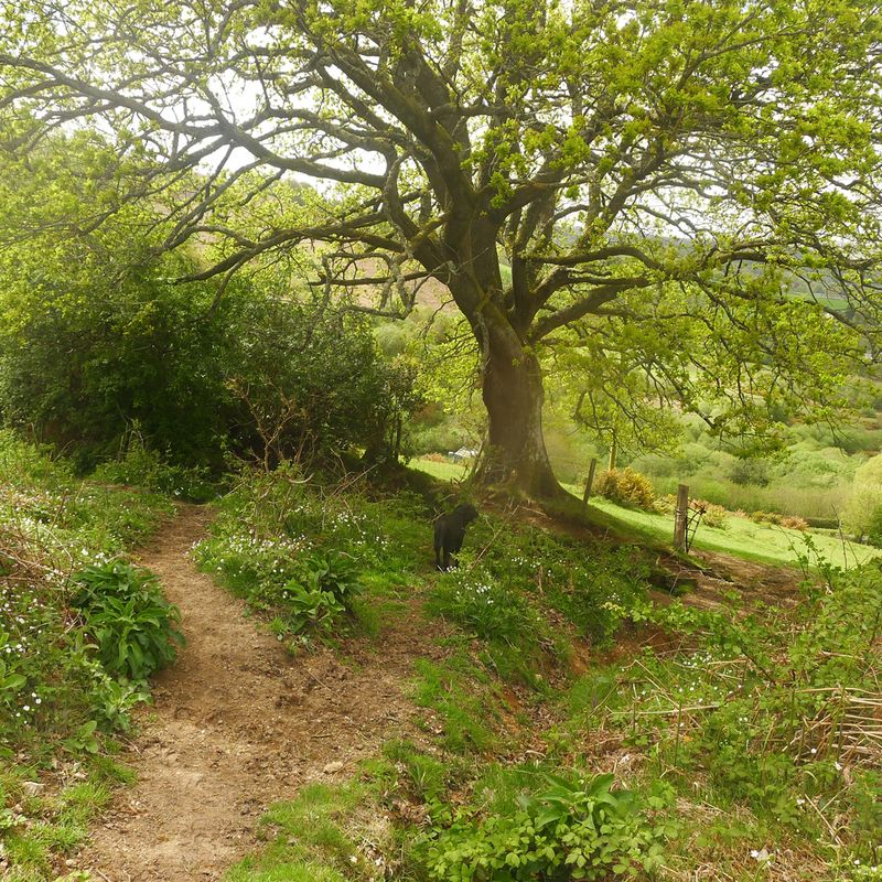 Pathway 8