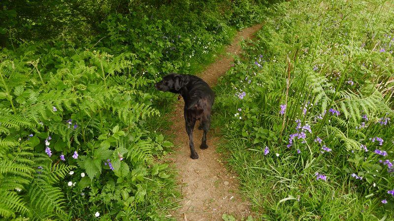 Wildflower path 3