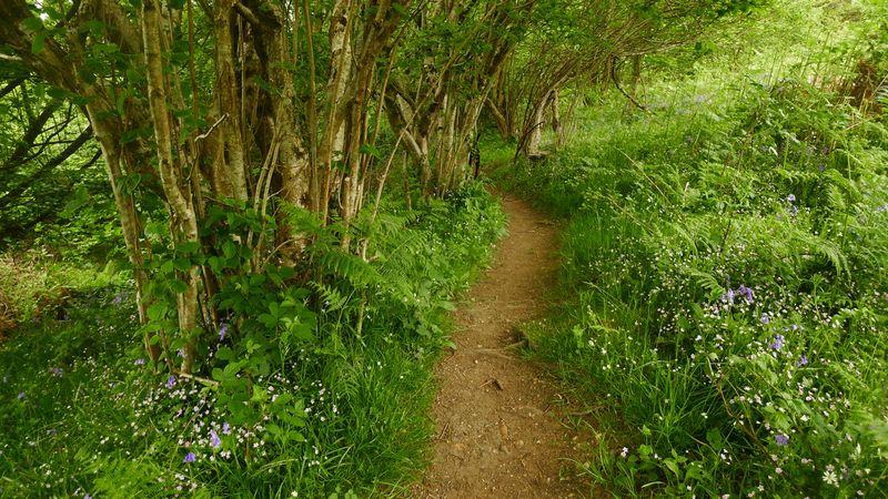 Wildflower path 5