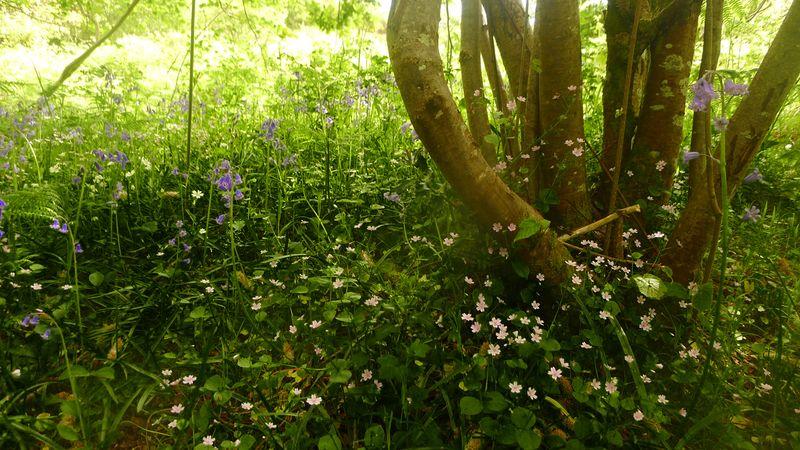 Wildflower path 6