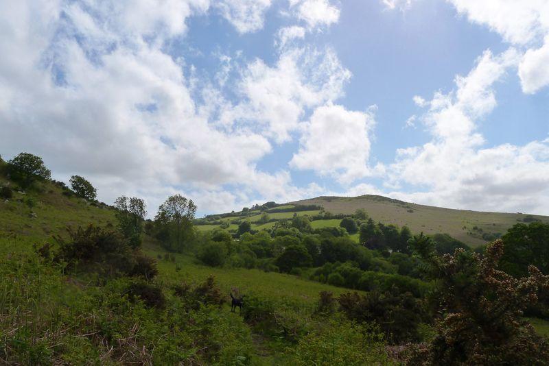 Hill 5