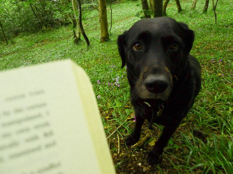 Reading Alan Garner in the woods