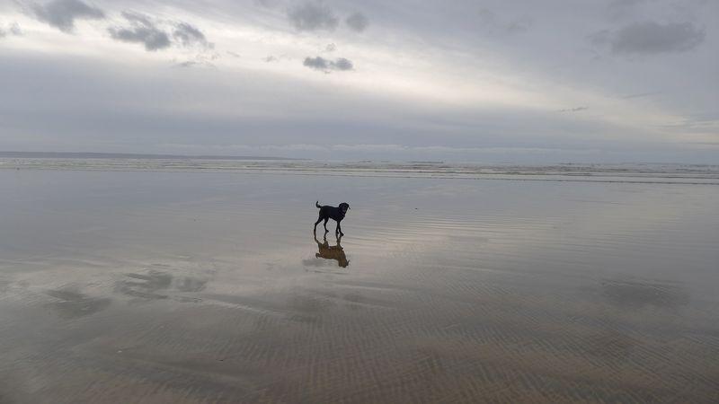 Dog, waves, sand, north Devon