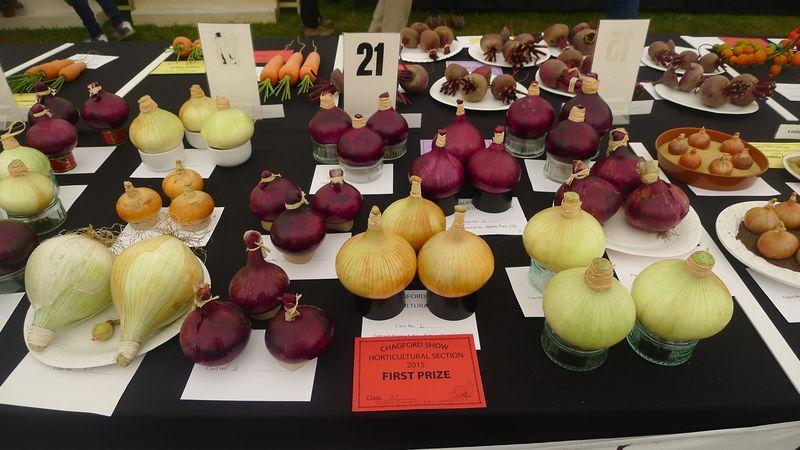 Prize-winning onions