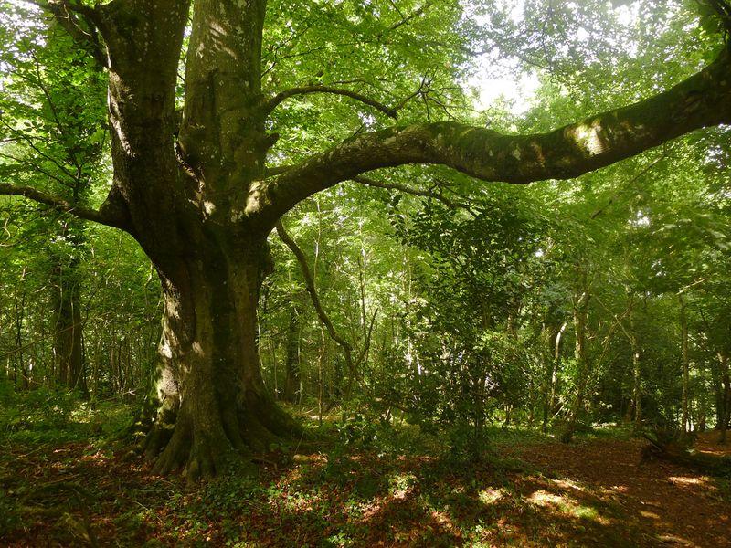 Dark Wood 7