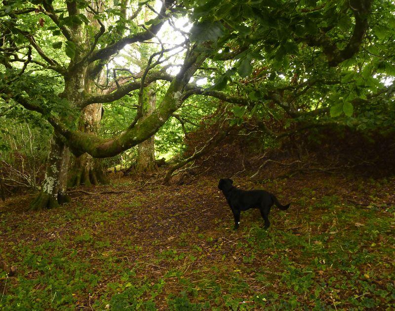 Dark Wood 10