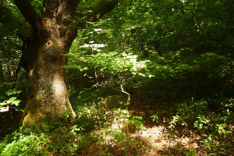 Dark Wood 6