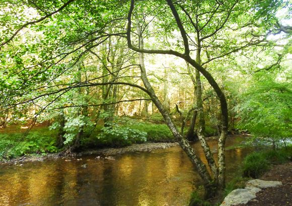 The River Teign, Devon