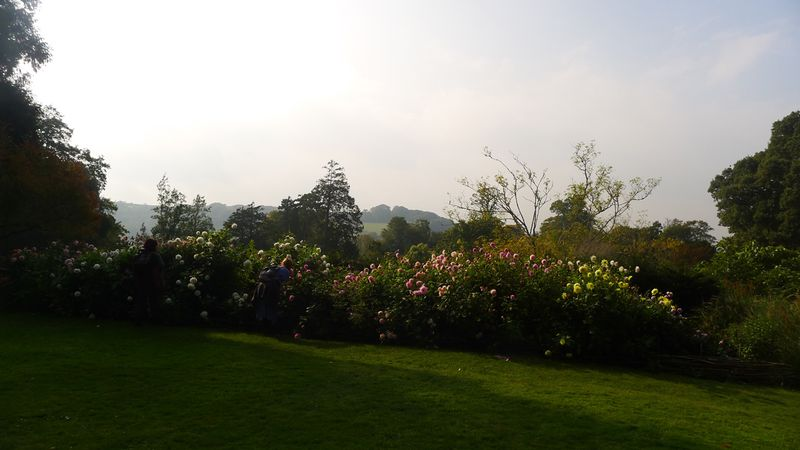 In the gardens at Greenway