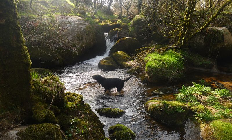 A splash in a Dartmoor stream