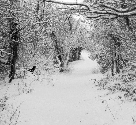 Black dog in a white landscape