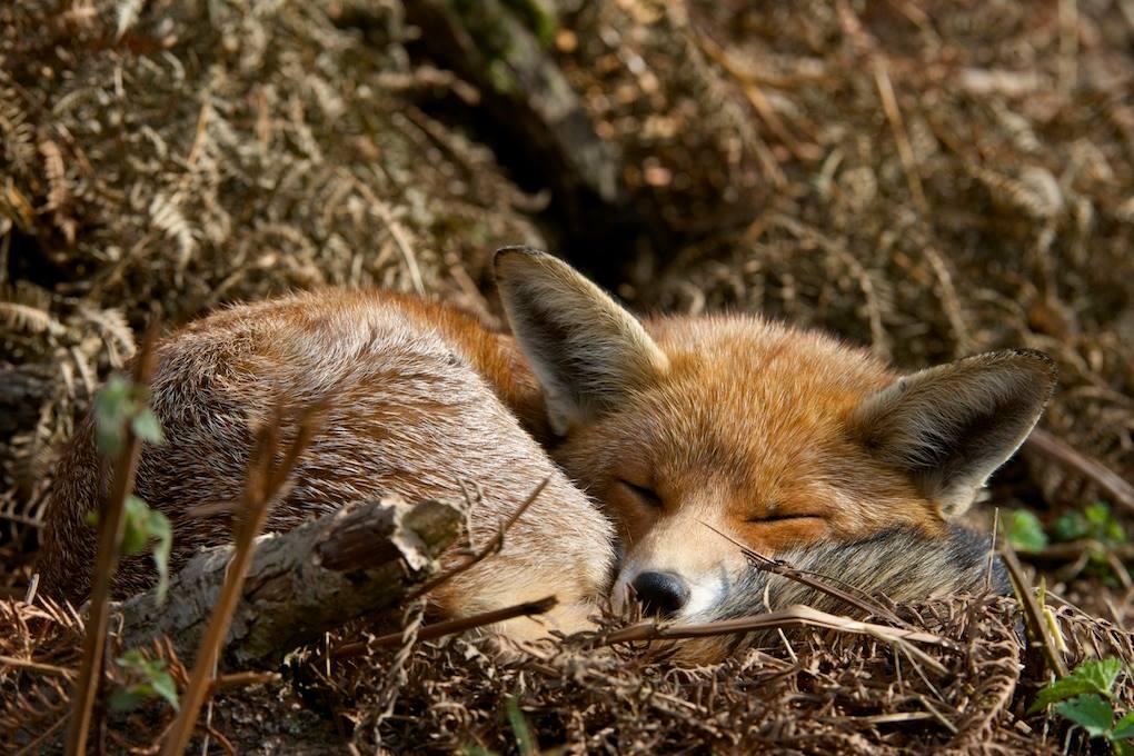 Lucille Clifton fox poems