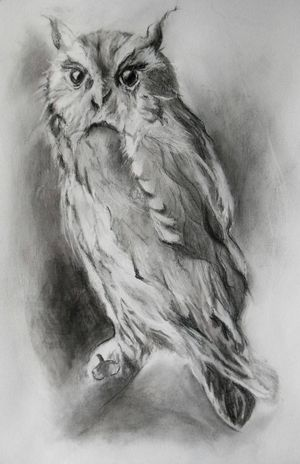 Owl by Mags Phelan Stones