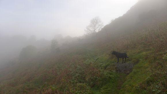 Misty morning on Nattadon