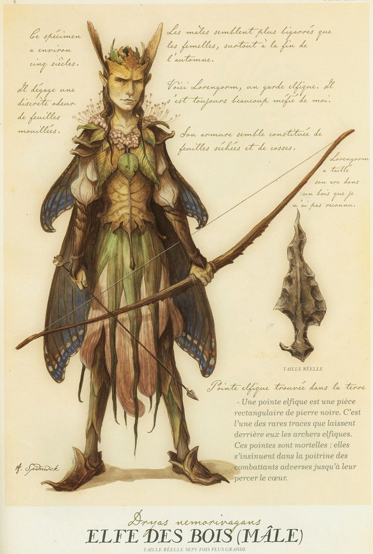 Elf of the Woods by Tony DiTerlizzi