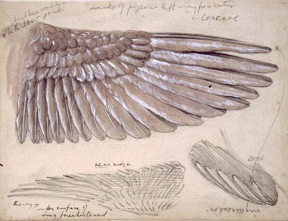 Sketches of wings by Sir Edward Burne-Jones