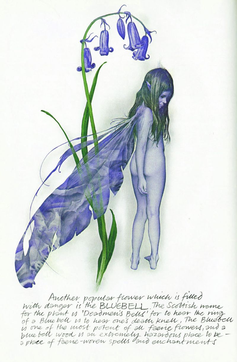 Bluebell Faery by Brian Froud
