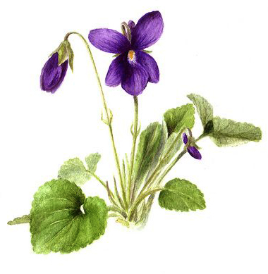 Do symbolize what bluebells Flower symbols