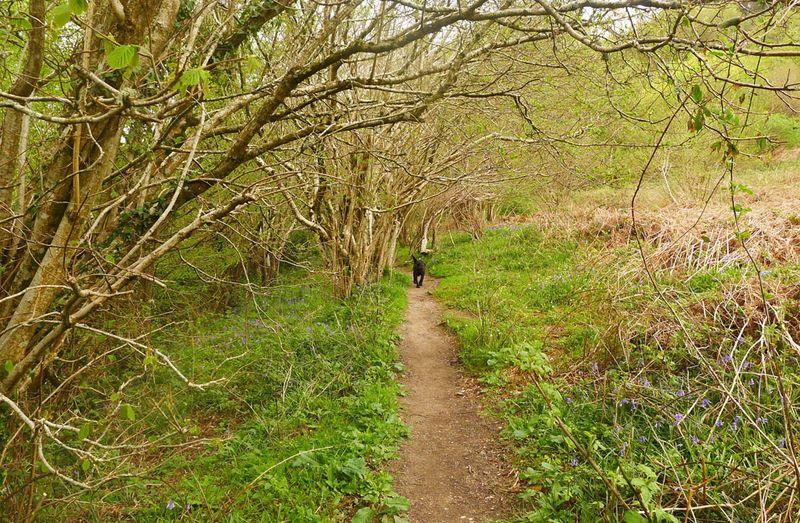 Wanderer's path