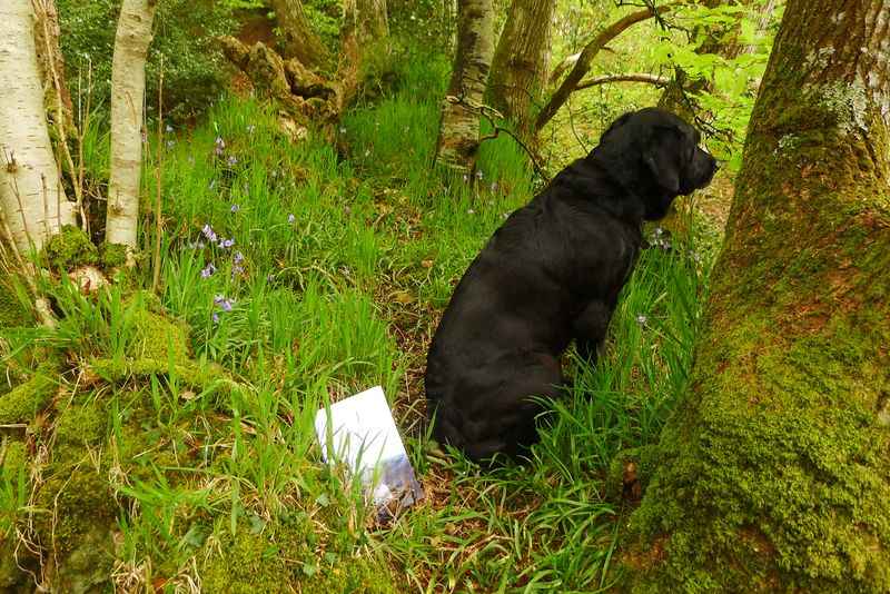 Tilly at the woodland's edge