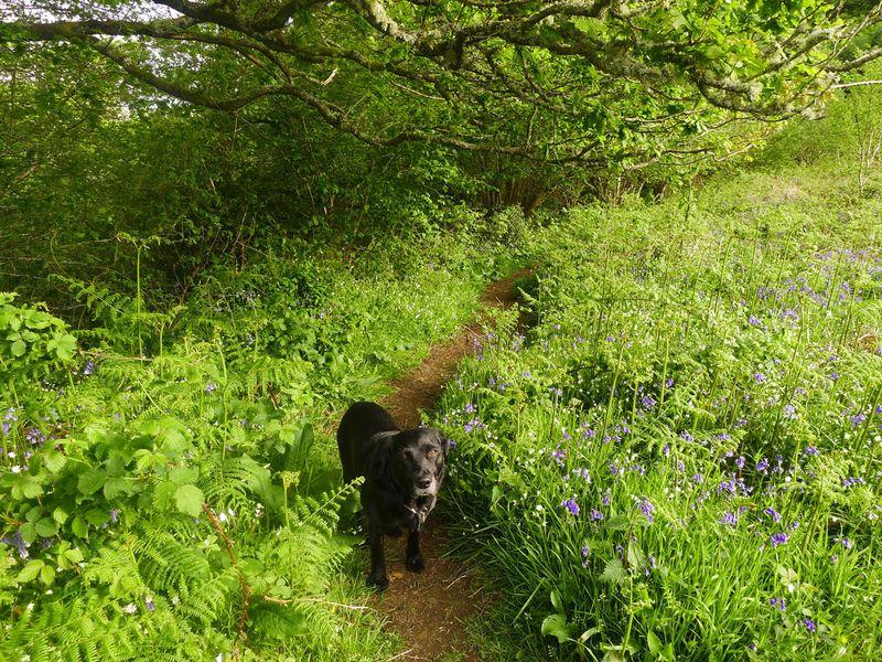 Hound and wildflowers