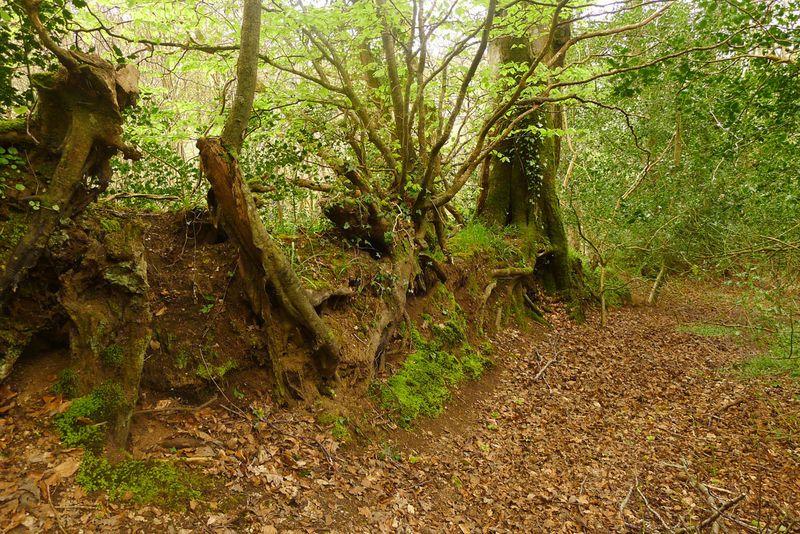 Overgrown stone wall
