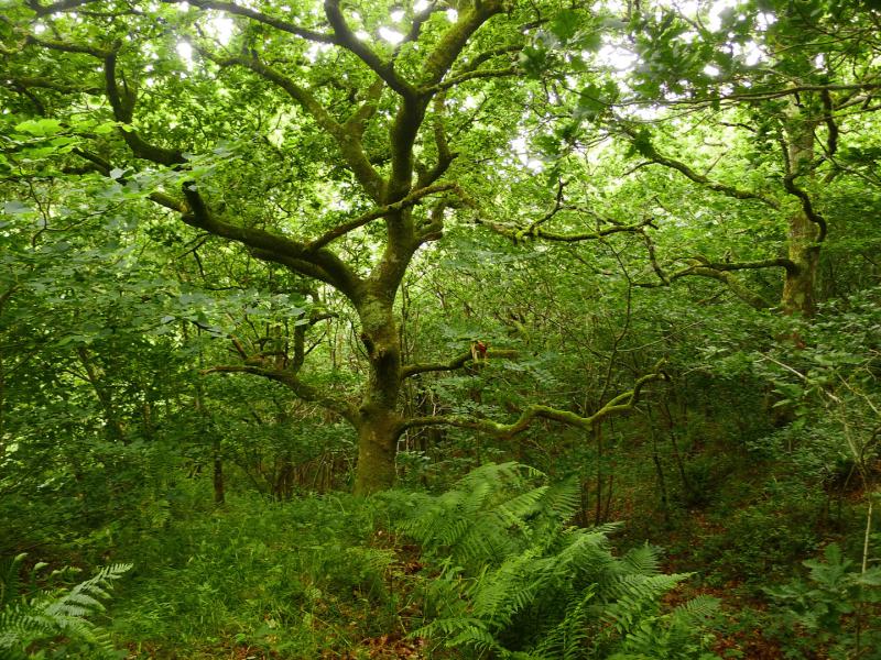 Woodland reverie 4