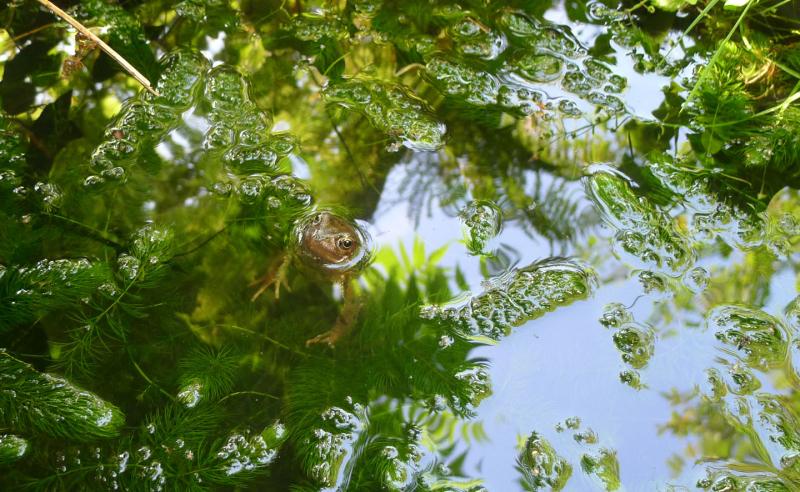 Frog neighbor