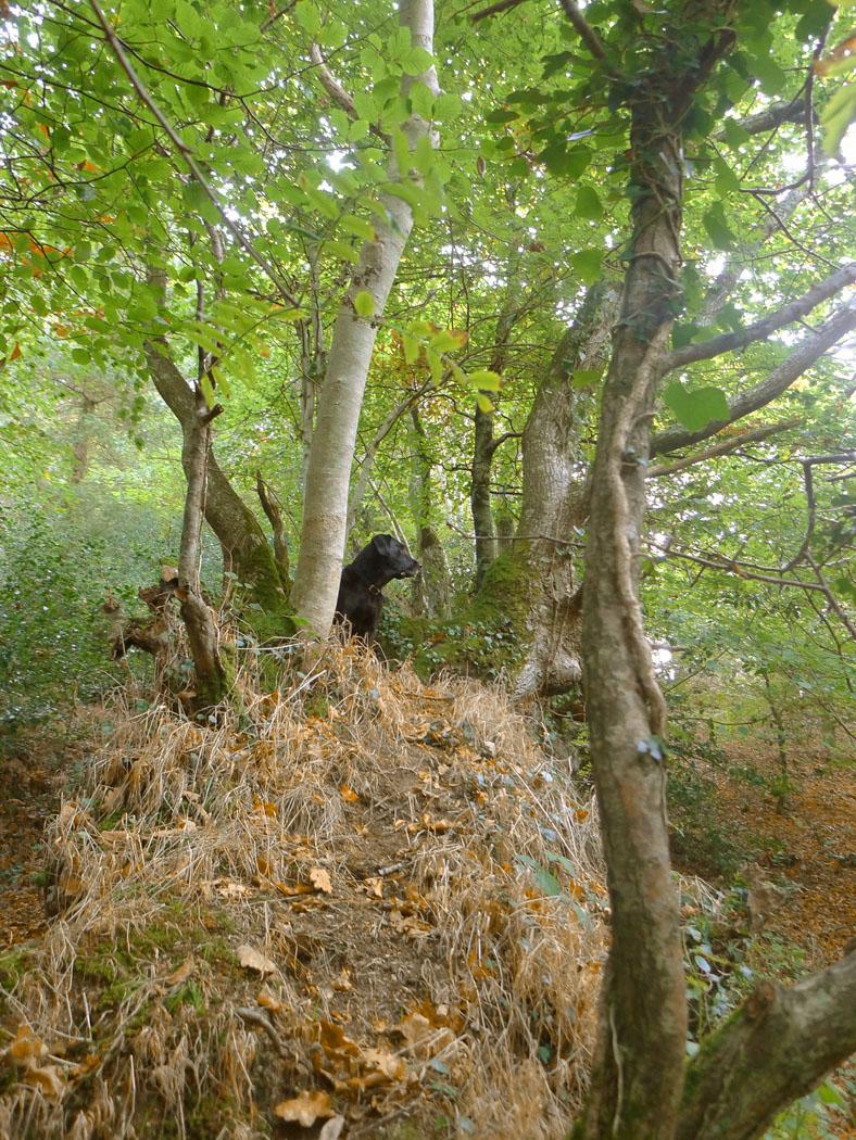 Nattadon Woods 1