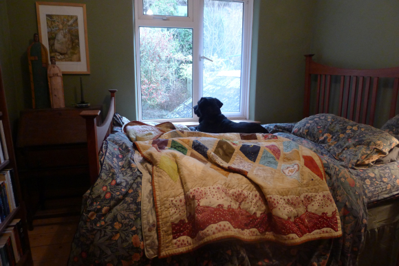 Tilly in the morning. Quilt by Karen Meisner.
