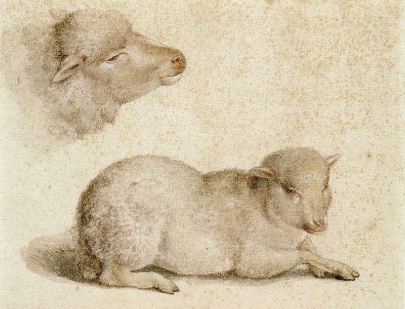 Drawings by Hans Holbein the Younger