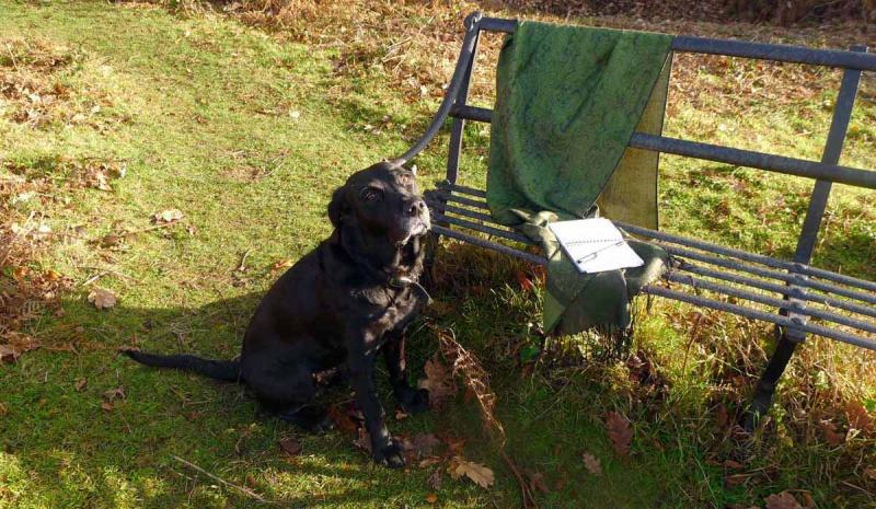 Gold Winter Light on a Black Dog's Muzzle