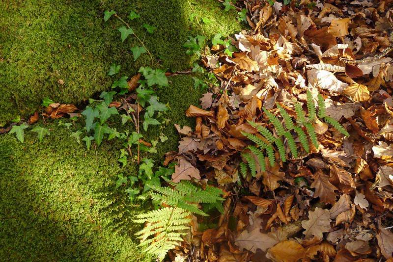 Leaf and moss