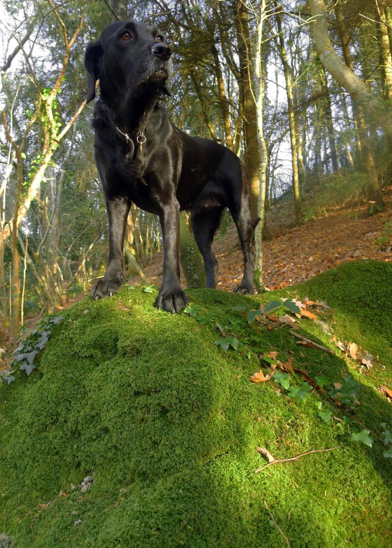 Rock hound 2